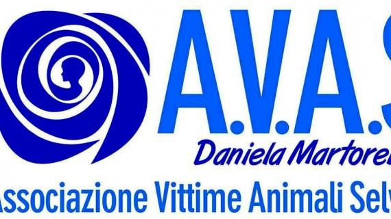 Presentazione ufficiale a Bomba dell'Associazione vittime animali selvatici