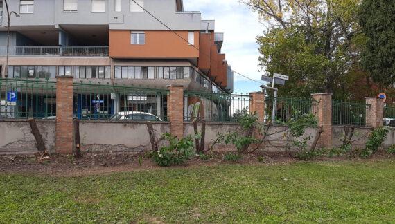 """Tagliati gli alberi attorno all'ospedale Renzetti, la Asl: """"Piante a rischio cedimento"""""""